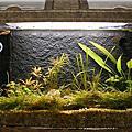 懶人套缸-水草造景