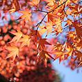 日本‧2010東京京都蜜月行/1201