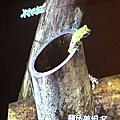 廣場遊戲、台北樹蛙與象山、香濃玉米湯、青蛙的外觀特徵