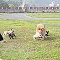 悠閒的午後時光&與法國鬥牛犬的追逐戰