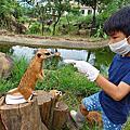 關西六福莊親近狐獴