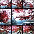 20131122日本(嵐山-北野天滿宮)