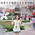 {苗栗} 大湖-花間集、大湖酒莊(油桐花)
