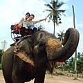 大象蛋泰美味了DAY 4