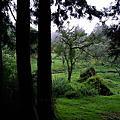 嘉義縣。阿里山鄉。阿里山國家森林遊樂區