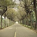 屏東潮州泗林