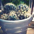 植物秀 (5D)
