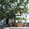 【南非South Africa】在孟儒的學校附近逛逛♥Stellenbosch University巡禮