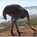 【南非South Africa】非洲的最西南端♥世界遺產之一的好望角(Cape of Good Hope)