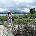 【東京OUT玩翻神奈川】能夠遠眺富士山的河口湖大石公園