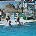 野柳海洋世界+天母海豚灣餐廳=海豚日 2008.09.11.
