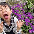 淡水-紫藤花之旅