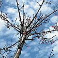 2008.03.01 新竹好天氣