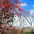 2010 Q1 日本出差記行-嵐山.奧伊吹.琵琶湖