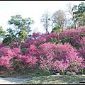 2012 櫻花祕境