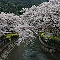 2012/4/11 JR PASS 跟著櫻花去旅行~Day9 山科疏水%他鄉遇故知