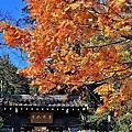 2012/12/3 一個人的紅葉行~嵐山
