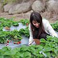 2011/12/20 草莓季開始囉!