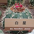 2010-11-17 玟玟台北花博旅遊