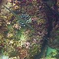 2011潛水