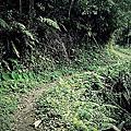 2012.04.01 竹東鎮 上坪 福德森林步道、上瑞森林步道、糯米橋