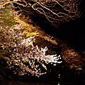 0409_清水寺賞夜櫻