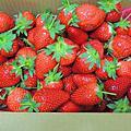2018.03.10一年一度草莓節,開心採草莓~幸福莓滿草莓園,又紅又大又香甜