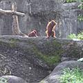 11/25/2007 深坑 / 動物園之旅