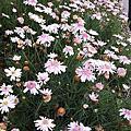 陽明山花鐘附近的花卉集景03.20.2014