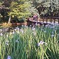 台北植物園花卉 1- 03.23.2014