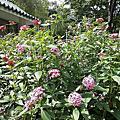 中正紀念堂花卉 -05.04. 2014