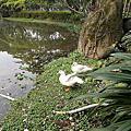 大安森林公園植物 03.16.2014