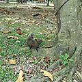 大安森林公園的動物