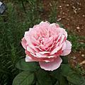 新生公園花卉-05.29.2014