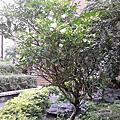 馬茶花 - 05. 22. 2014