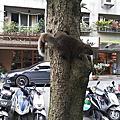 動物篇 - 松鼠
