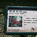 大安森林公園四月份花卉