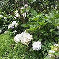 士林花卉試驗中心夏季花彩