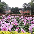 台大校園四月裡的花花