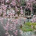 德川家ㄉ櫻花瀑布