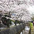 【日本】京都。哲學之道賞櫻