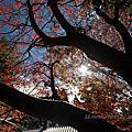 風景記錄。福壽山農場