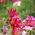 2010_11_27 橋頭花海