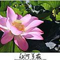 2010 06 29 台南 白河 蓮花