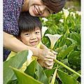 20140412_陽明山採海芋