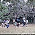 關西奈良--奈良公園  春日大社