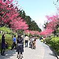 2012中正紀念堂櫻花
