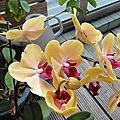 ORCHID 蘭花篇
