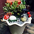 創意小盆栽