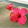 2016.09 Boracay 長灘島 * Day 4